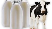 Indonesia đưa sữa tươi thành mặt hàng thực phẩm cơ bản