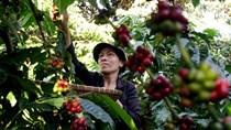[Phần 1] Mắt xích trong chuỗi cung ứng nông nghiệp Đông Nam Á