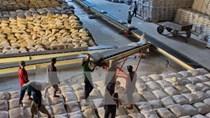 Xuất khẩu gạo thế giới trước những khó khăn