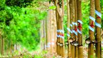 Tổng hợp các bản tin ngày 20/11 của Sở Giao dịch Hàng hóa Việt Nam
