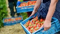 TT rau quả Đức: Có dòng nhập khẩu lớn nhất trong thương mại rau quả nội khối EU
