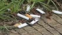 Thuốc lá: Mối nguy hại đối với môi trường sống
