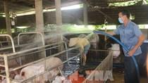 Giá thức ăn chăn nuôi tăng cao