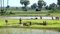 Campuchia ký thỏa thuận với IRRI về việc cải thiện ngành lúa gạo