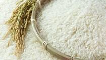 Năm 2019 bắt đầu chu kỳ tăng giá gạo