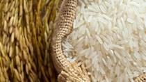 Biến động mạnh trên thị trường lúa gạo Philippines