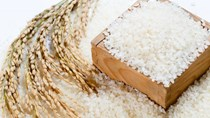 Ấn Độ sẽ trợ cấp cho xuất khẩu gạo non-basmati