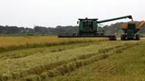 Báo cáo của USDA về thị trường lúa gạo thế giới