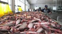 Trung Quốc nhập khẩu miễn thuế đối với cá tra, cá basa Việt Nam