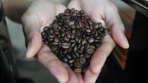 Đông Nam Á hướng tới phát triển cà phê bền vững