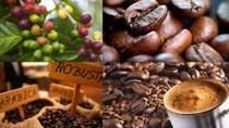 Cà phê Việt lựa chọn mới của thương nhân Ai Cập