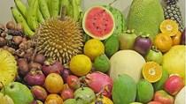 Xóa bỏ các vấn đề cốt lõi để xuất khẩu trái cây, Indonesia cạnh tranh với TL và VN