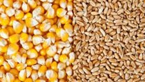 Giá nông sản và kim loại thế giới ngày 26/11/2019