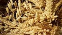 MXV: Tình hình xuất khẩu nông sản Mỹ tuần tới 6/2