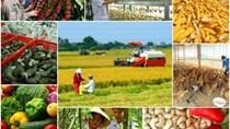 Báo cáo của USDA về cung cầu nông sản thế giới