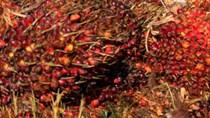 Thị trường hàng nông sản thế giới năm 2019: Giá dầu cọ tăng mạnh nhất