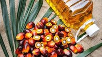 Tiêu thụ dầu cọ trên toàn cầu lần đầu tiên giảm