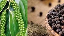 Tìm hướng phát triển xuất khẩu hồ tiêu bền vững trong bối cảnh hội nhập