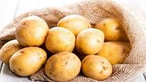 Giá khoai tây Trung Quốc thấp nhất 3 năm