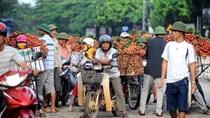Thương lái Trung Quốc bất ngờ ngừng mua vải thiều