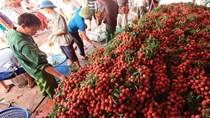 Xuất khẩu nông sản có dấu hiệu hồi phục