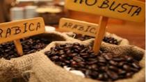 Giá cà phê Arabica thấp nhất 1,5 năm
