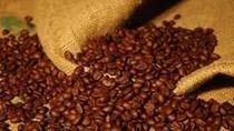 Giá cà phê bất ngờ tăng mạnh trở lại