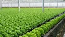 Vingroup xây nhà kính 1.000 tỷ đồng trồng rau tại Vĩnh Phúc