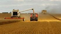 Giá lương thực toàn cầu giảm mạnh nhất 7 năm do đà bán tháo hàng hóa