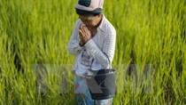 Chính phủ Thái Lan kêu gọi ngừng trồng lúa trên cả nước