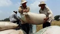 Hợp đồng xuất khẩu gạo đã ký đạt gần 5,7 triệu tấn