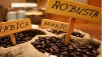 Tuần 12-16/10: Giá cà phê tăng mạnh do khô hạn