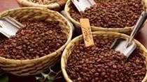 Giá cà phê Tây Nguyên giảm mạnh 600 nghìn đồng/tấn ngày 24/10