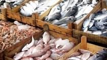 USDA lo ngại về số lượng lô hàng thủy sản bị từ chối nhập khẩu