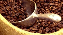 Thị trường cà phê, ca cao ngày 29/4/2016