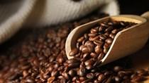 Thị trường cà phê, ca cao ngày 31/5/2016