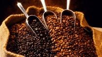 Ngành điều, cà phê hướng đến chế biến sâu, xuất khẩu bền vững