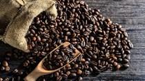 Giá cà phê trong nước ngày 09/11/2017