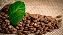 Giá cà phê trong nước ngày 25/1: Lấy lại mốc 37.100 đồng/kg