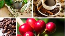 Toàn cảnh ngành công nghiệp cà phê ASEAN phát triển mạnh