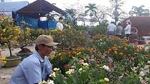 Độc lạ: Từ bờ bụi, hoa ngũ sắc thành bonsai trình làng Tết