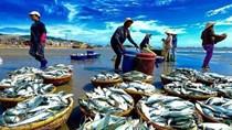 Chính phủ ban hành Nghị định về Luật Thủy sản