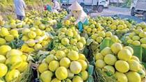 Xuất khẩu nông sản quí I đạt gần 4 tỉ USD, nhiều mặt hàng tăng trưởng 2 con số