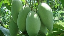 TT nông sản ngày 23/6: Hoa quả Việt Nam thu hút khách trên thị trường thế giới