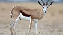 Chỉ thị của Thủ tướng Chính phủ về giải pháp cấp bách quản lý động vật hoang dã