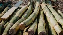 Tình hình thời tiết khô hạn tại Brazil hỗ trợ giá đường tăng mạnh