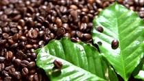 Kỳ vọng của thị trường vào sự phục hồi kinh tế tiếp tục hỗ trợ giá cà phê và bông