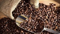 Giá cà phê arabica ngày 02/11 tăng do đồng real hồi phục, ca cao chạm đỉnh 6 tuần
