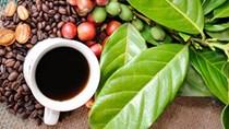 Giá cà phê ngày 11/7 tiếp nối đà hồi phục