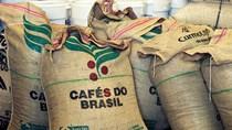 Giá cà phê ngày 15/10 tăng nhỏ giọt tùy nơi